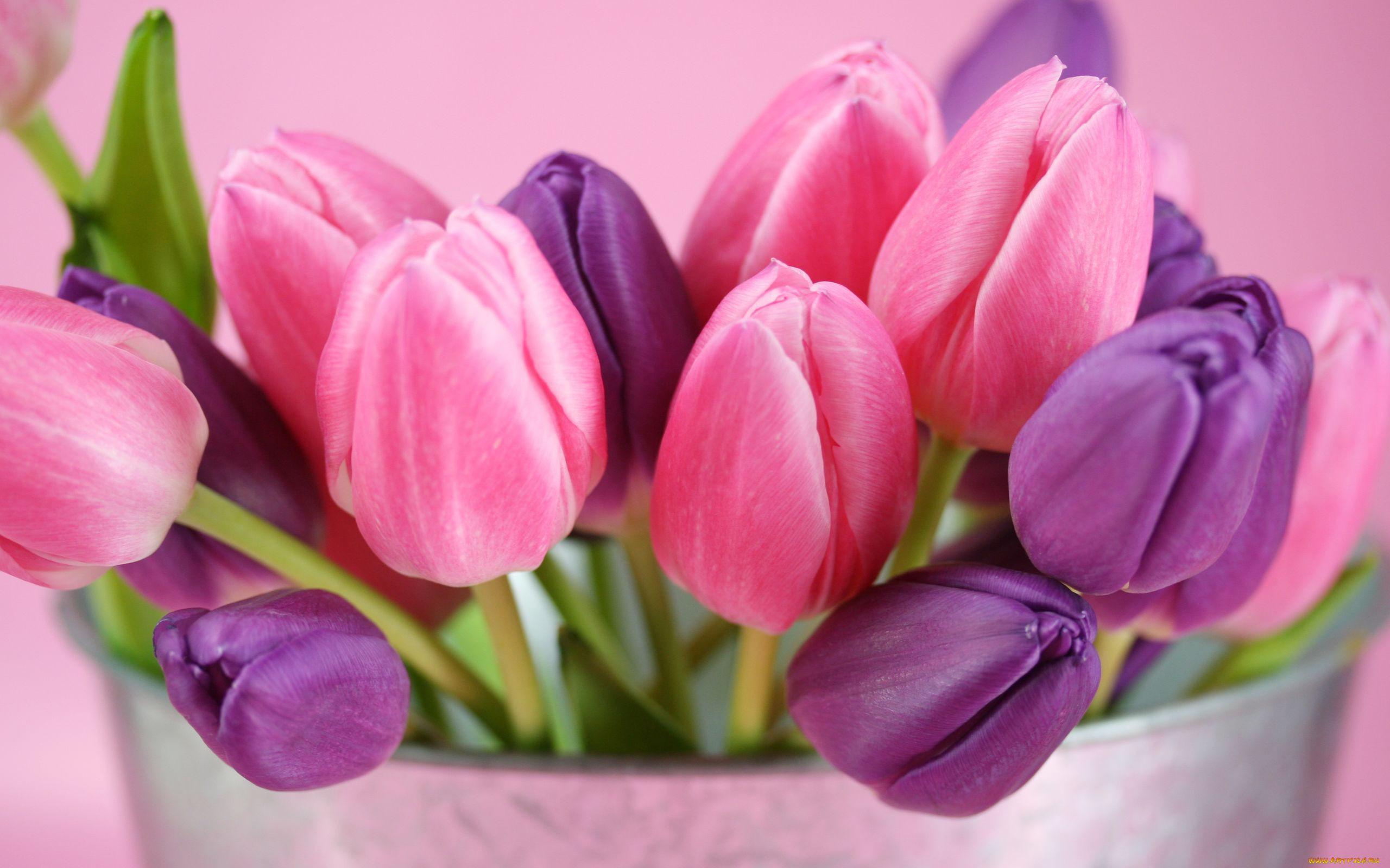 фото с тюльпанами на телефон куча назойливых, как
